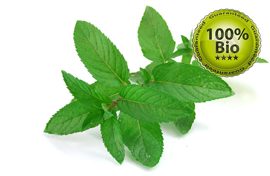 Vapo Bio E-Liquid 10ml menthe (bio 100% naturel)